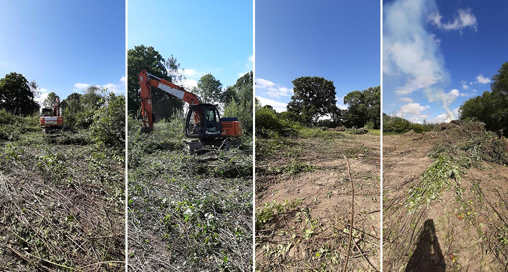 woodland clearing at Belgar Orchard